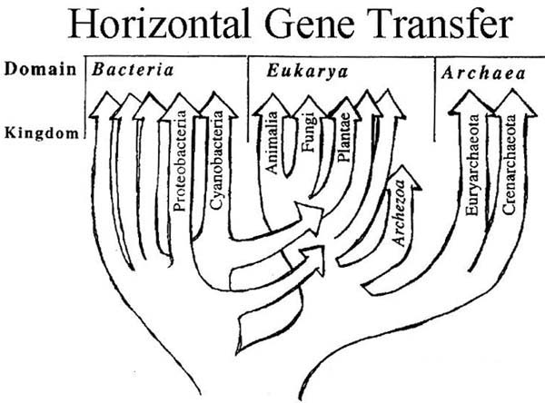an introduction to the history of horizontal gene transmission The history of human sleeping sickness in east africa is inextricably linked with political unrest, scarcity of resources, and lack of the necessary administrative infrastructure to take advantage of recent developments in technology.